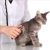 Ветеринарные клиники в Икряном
